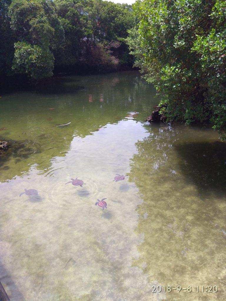 Черепаший аквариум Нунгви
