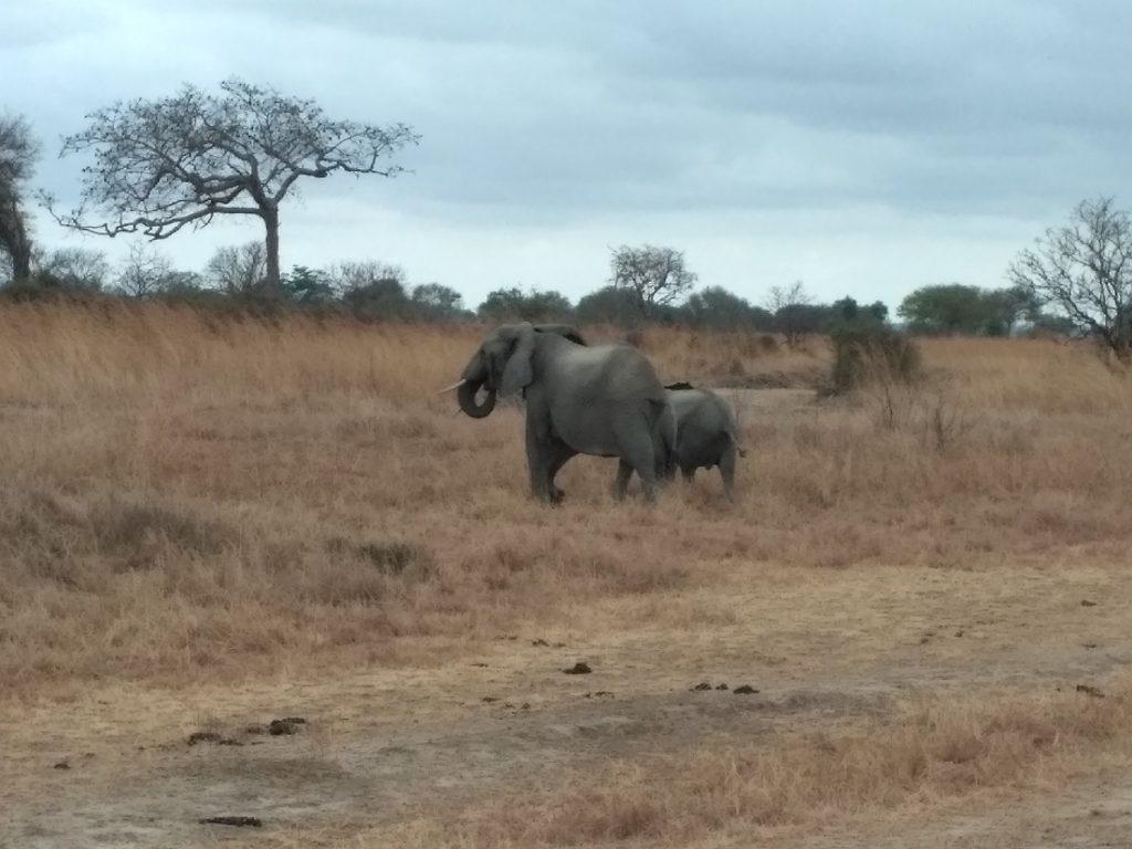 Чем заняться на Занзибаре - Сафари в парк Микуми.