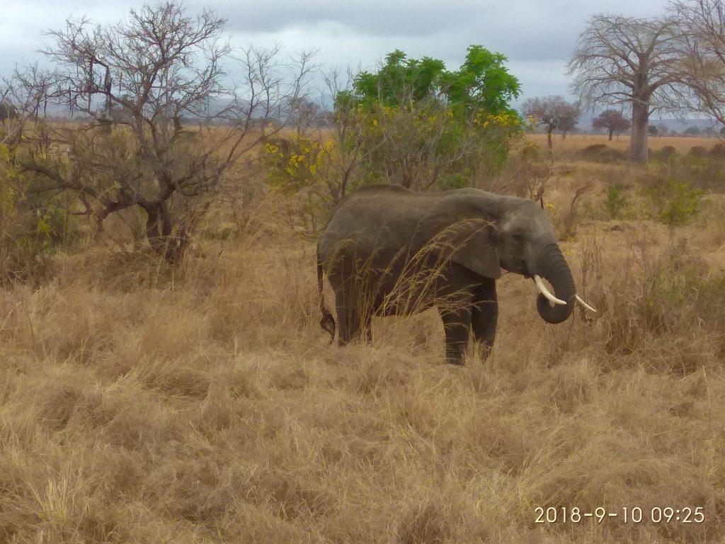 Слоны в парке Микуми.
