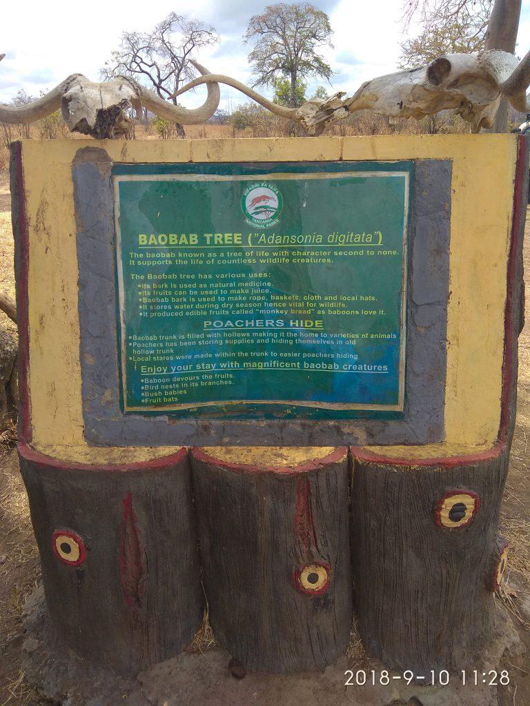 Баобаб в парке Микуми, в котором можно спрятаться.